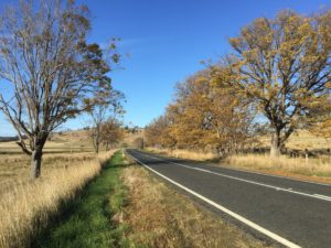 A blue sky, yellow autumn leaves, wheat-colored shrub grass and an open road